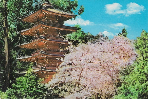 Golden Gate Park Japanese Tea Garden Pagoda Postcard